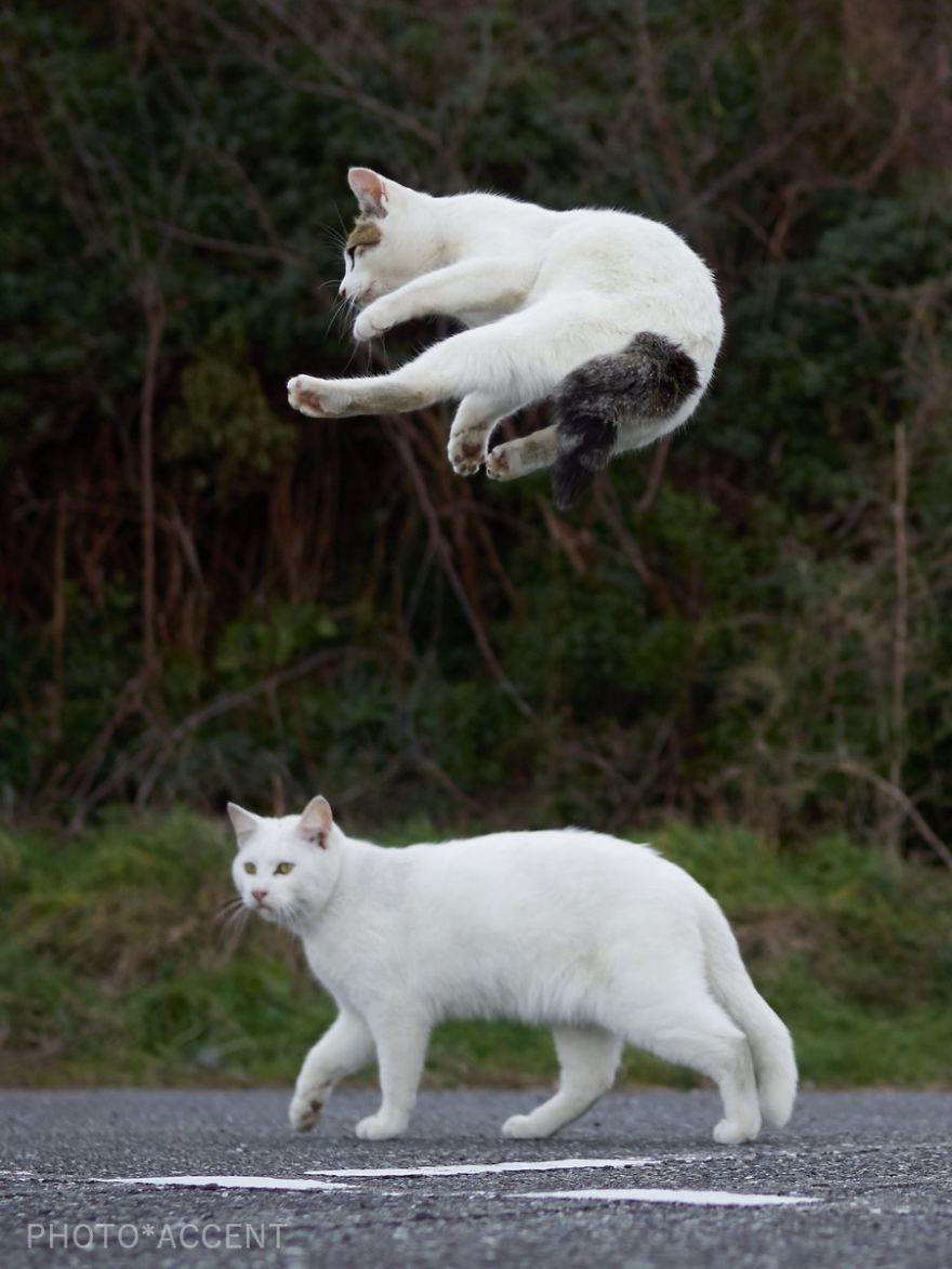 ninja-cats-photography-hisakata-hiroyuki-107-59f1a8424af18__880