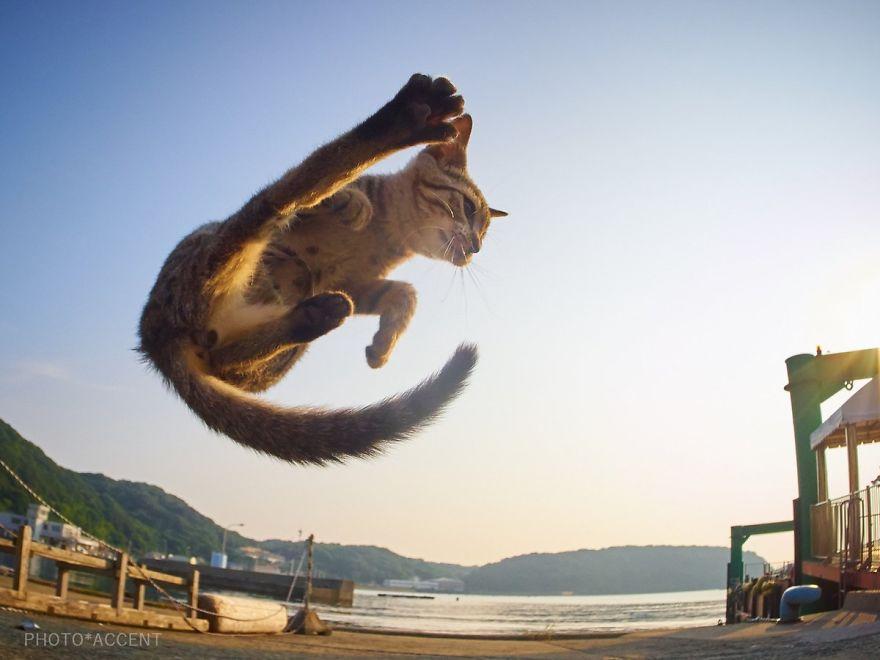 ninja-cats-photography-hisakata-hiroyuki-109-59f1a88aaaff8__880