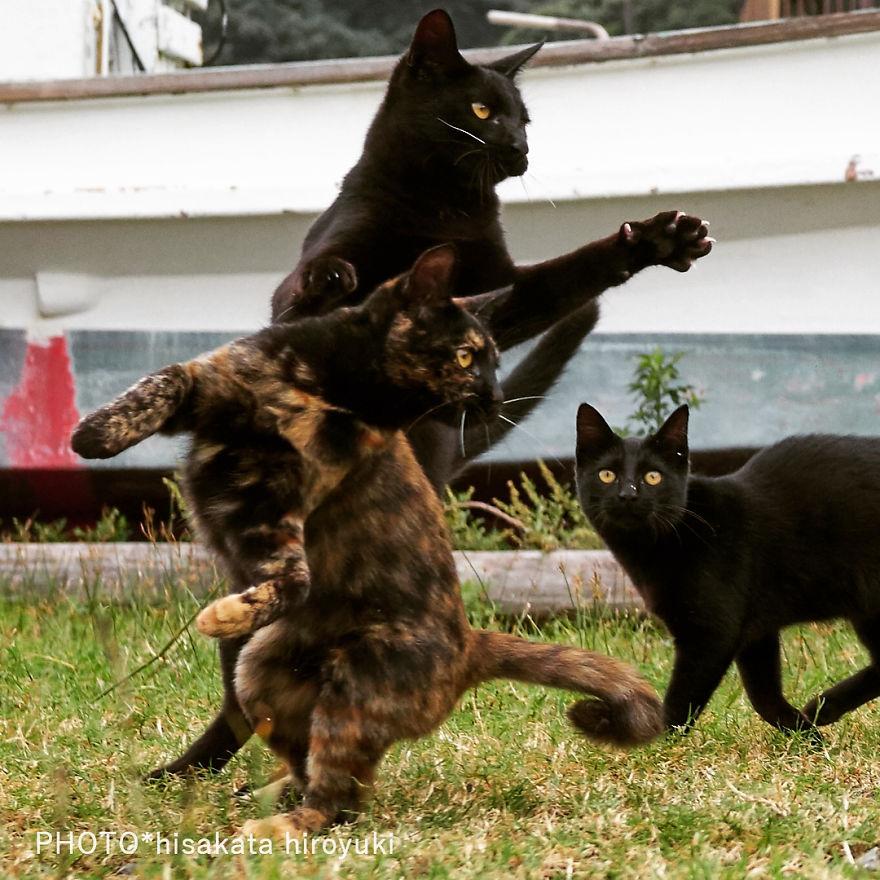 ninja-cats-photography-hisakata-hiroyuki-11-59f1972b563d0__880