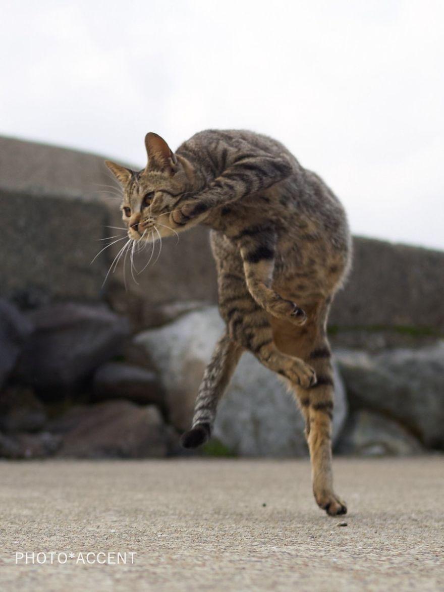 ninja-cats-photography-hisakata-hiroyuki-111-59f1a8bec0175__880
