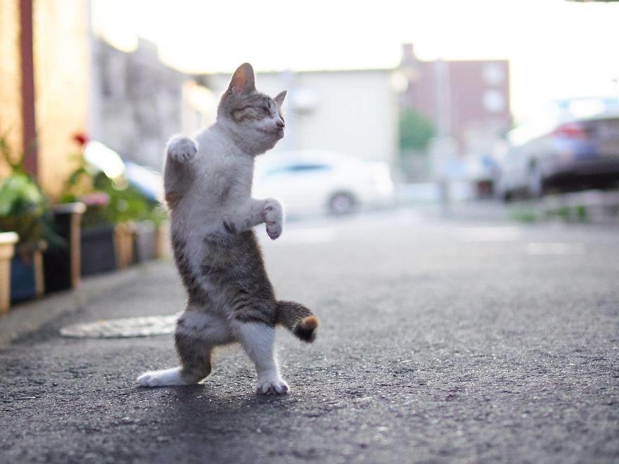 ninja-cats-photography-hisakata-hiroyuki-28-59f1975a2e204__880
