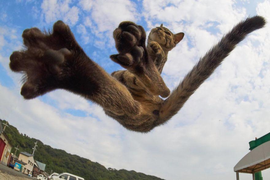ninja-cats-photography-hisakata-hiroyuki-29-59f198a020b23__880