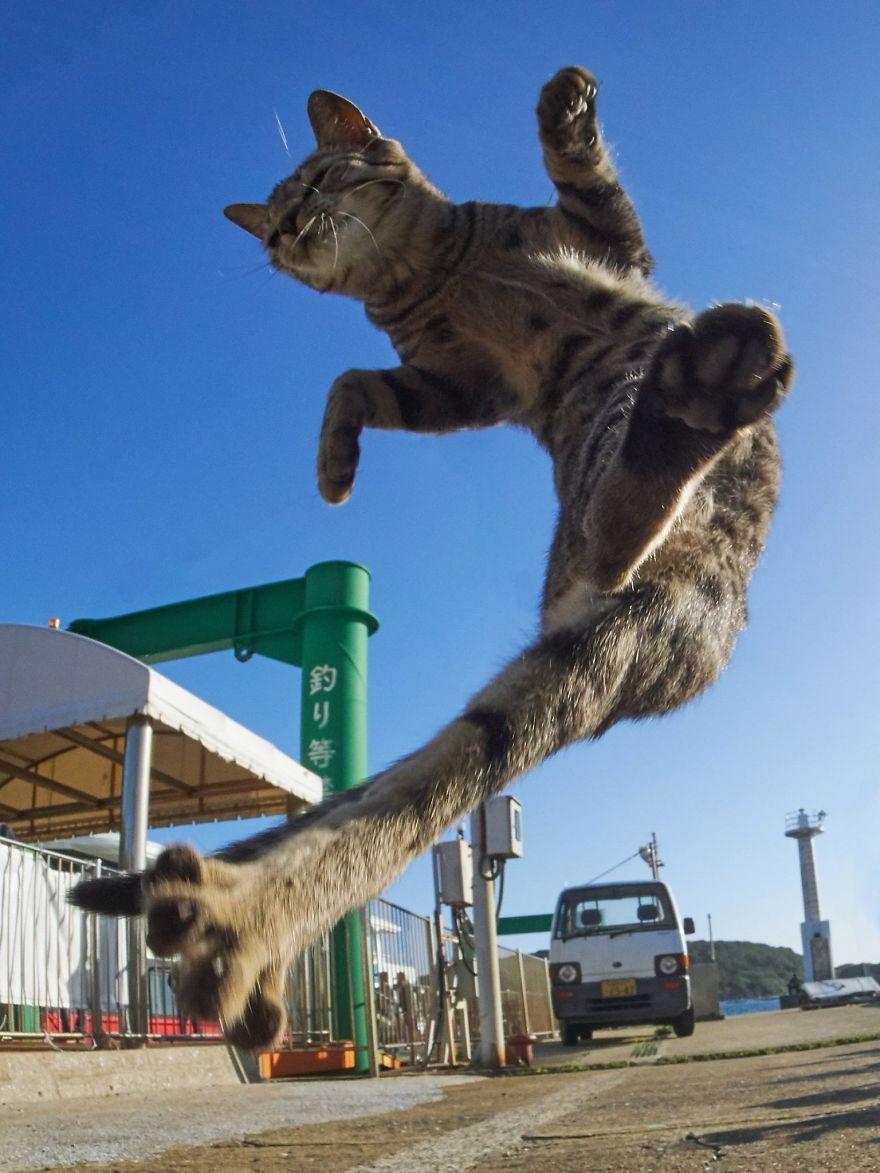 ninja-cats-photography-hisakata-hiroyuki-32-59f198a8e487c__880