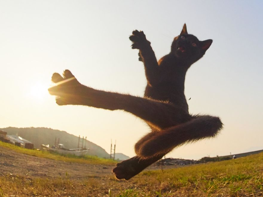 ninja-cats-photography-hisakata-hiroyuki-33-59f19896ed89b__880