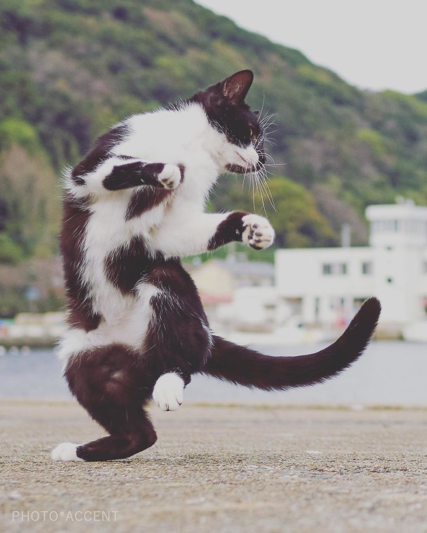 ninja-cats-photography-hisakata-hiroyuki-35-59f1976b5f8e4__880