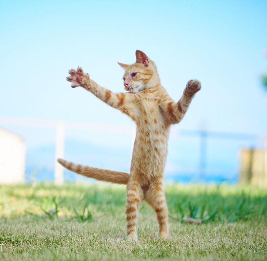ninja-cats-photography-hisakata-hiroyuki-41-59f1977681efc__880