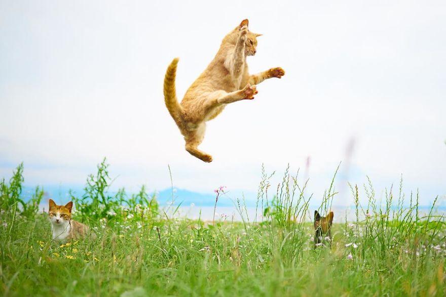 ninja-cats-photography-hisakata-hiroyuki-46-59f1978044b3f__880