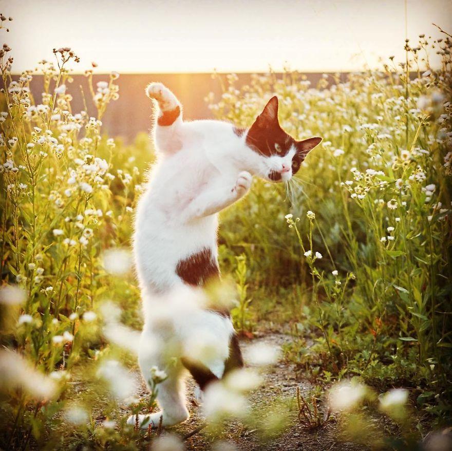 ninja-cats-photography-hisakata-hiroyuki-50-59f1978a4d594__880