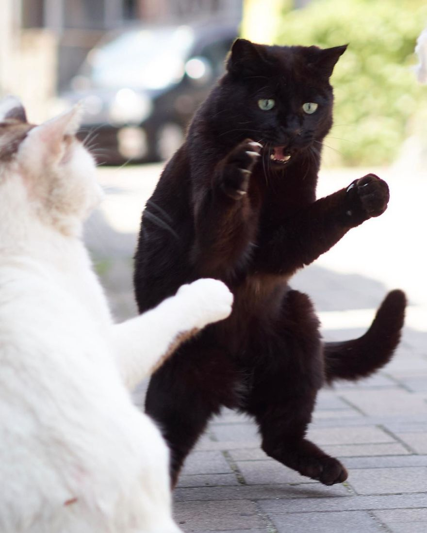 ninja-cats-photography-hisakata-hiroyuki-59-59f197a333d06__880