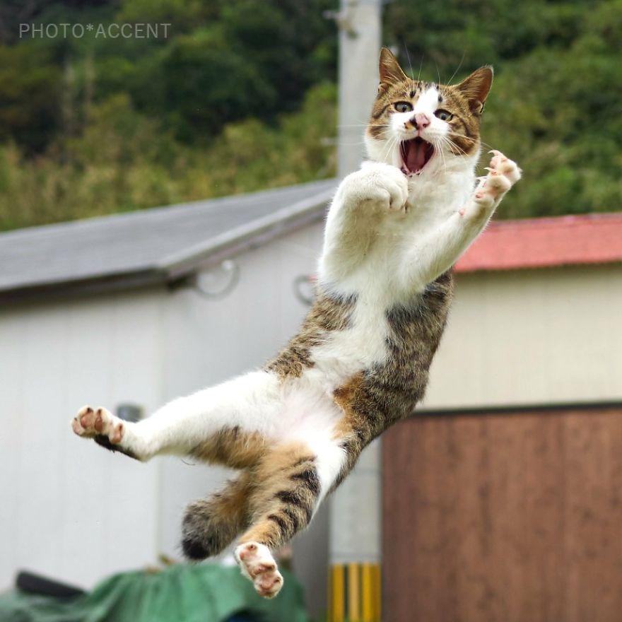 ninja-cats-photography-hisakata-hiroyuki-59f19c6677fc2__880