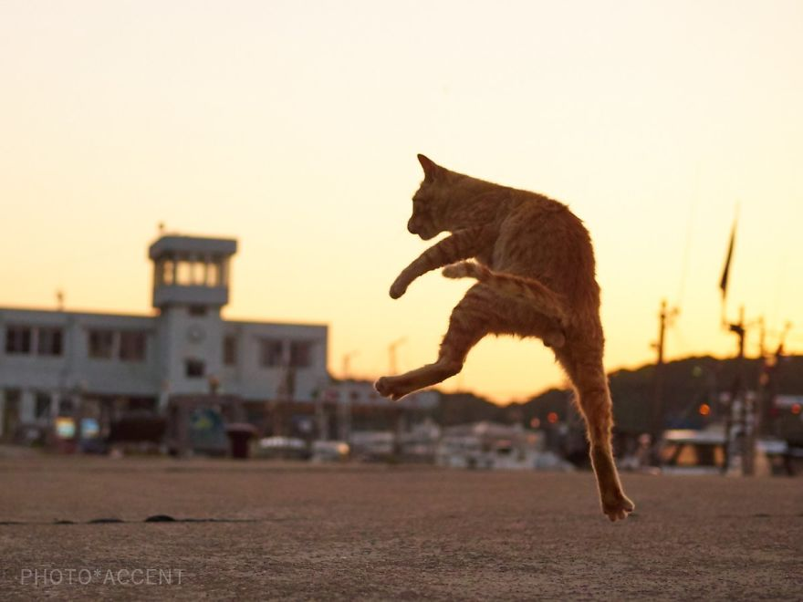ninja-cats-photography-hisakata-hiroyuki-59f19c680d0c9__880