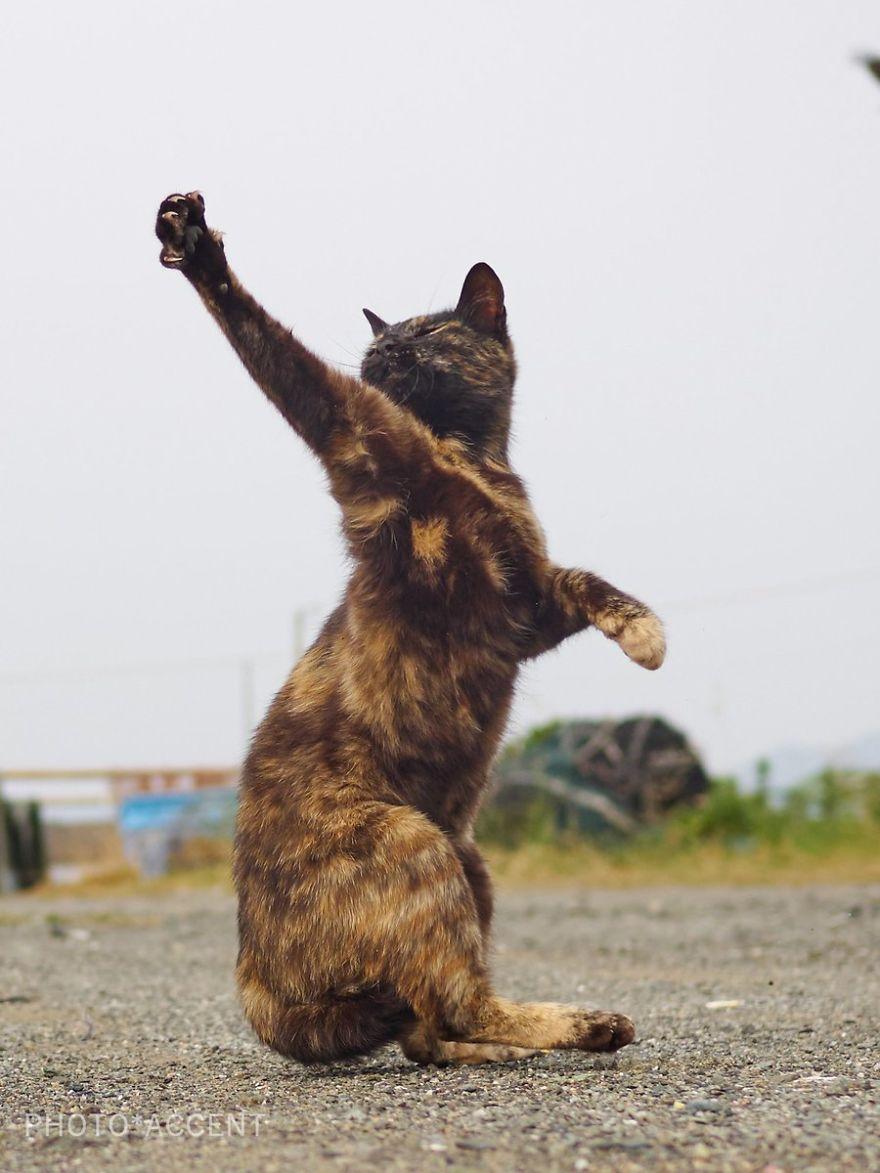 ninja-cats-photography-hisakata-hiroyuki-59f19d3ea4fba__880