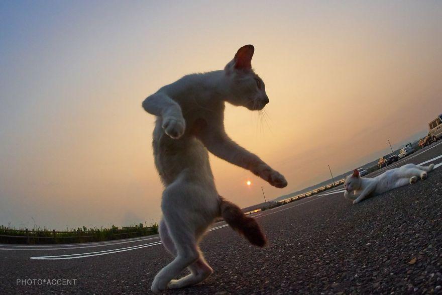 ninja-cats-photography-hisakata-hiroyuki-59f19d633b2b8__880