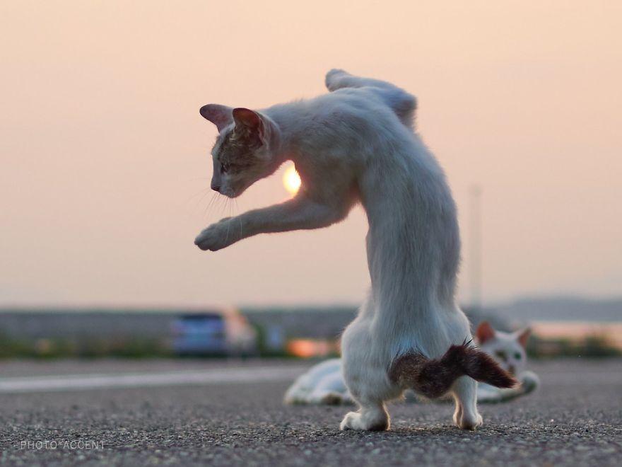 ninja-cats-photography-hisakata-hiroyuki-59f19d64b1b96__880