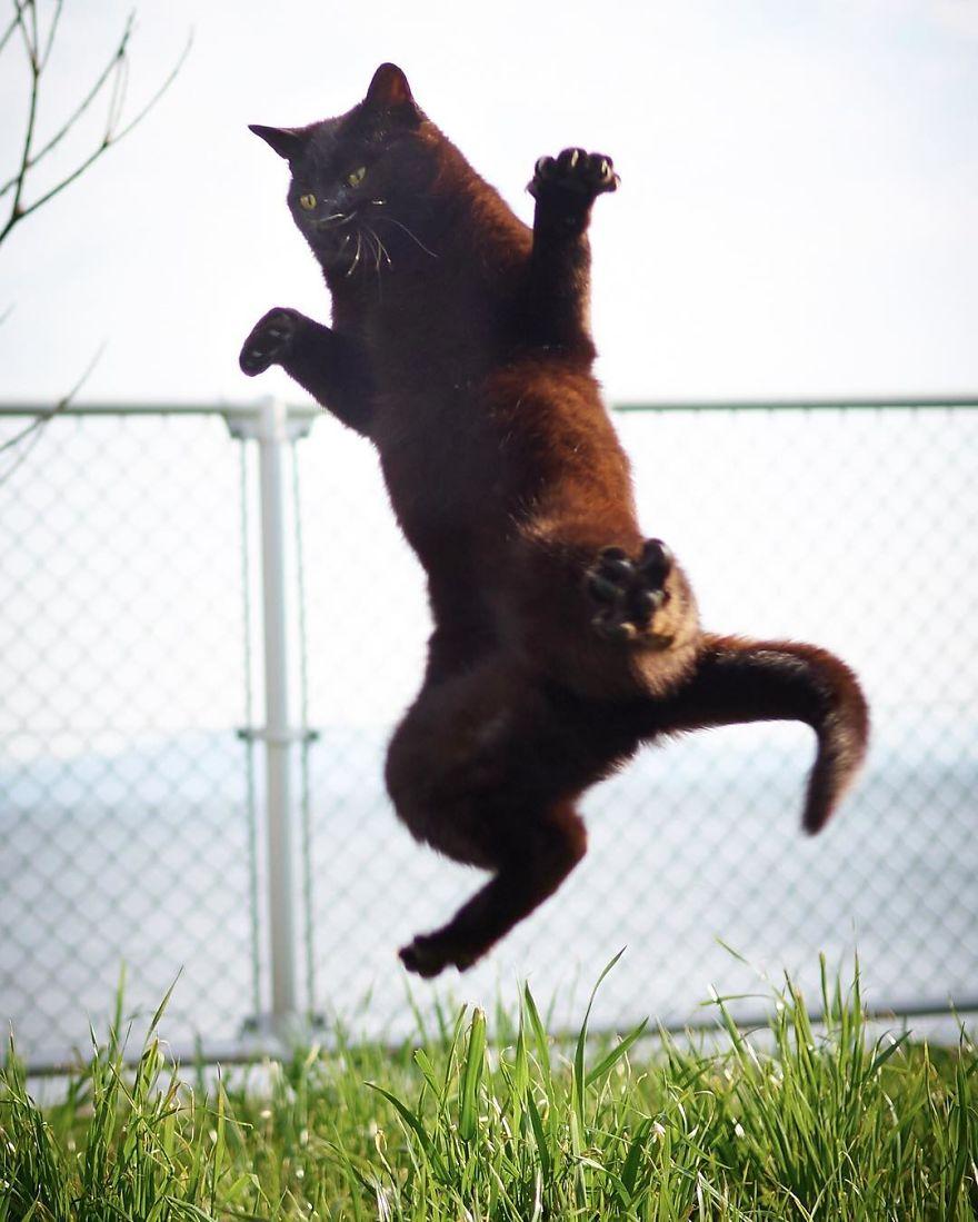 ninja-cats-photography-hisakata-hiroyuki-62-59f197a921a05__880