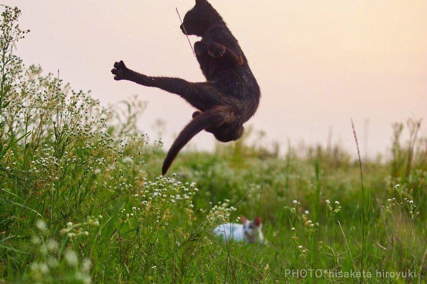 ninja-cats-photography-hisakata-hiroyuki-70-59f197bb34091__880