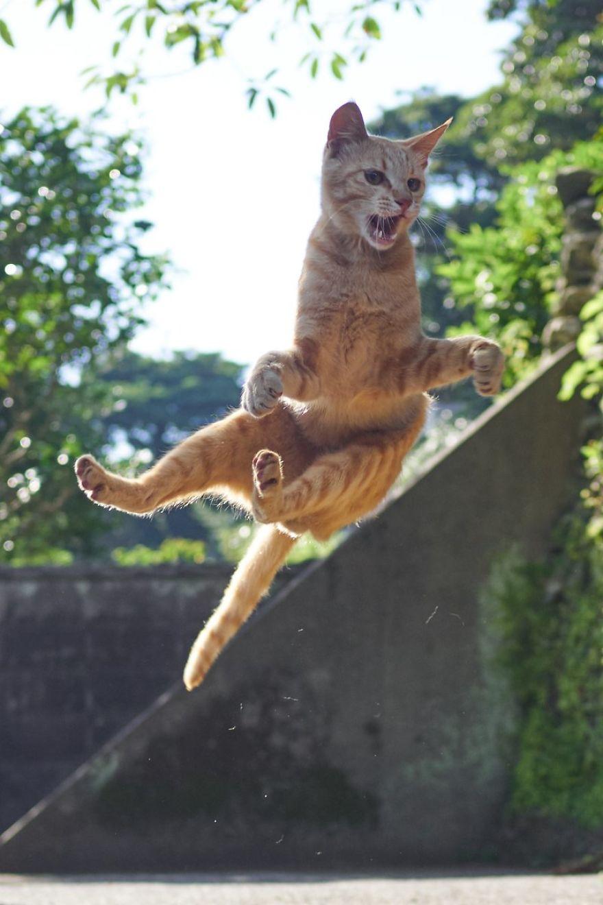 ninja-cats-photography-hisakata-hiroyuki-74-59f197c44d24e__880