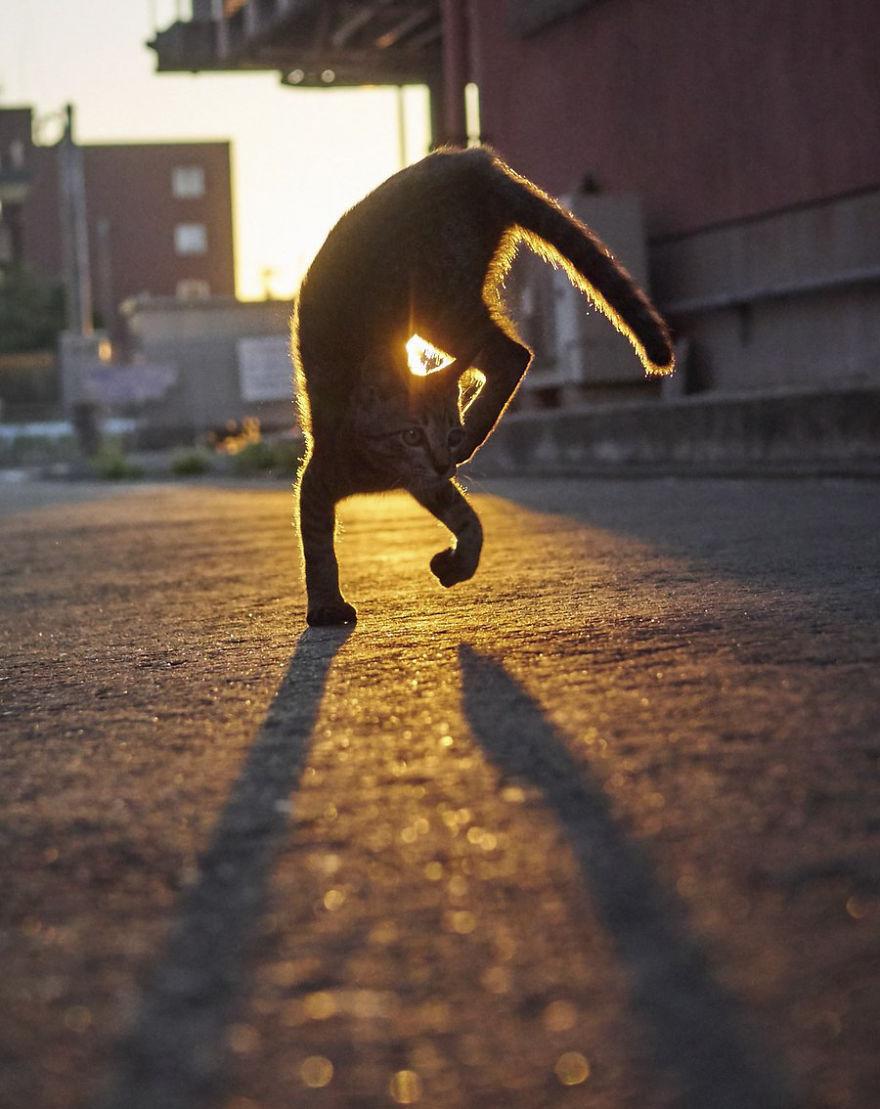 ninja-cats-photography-hisakata-hiroyuki-77-59f196e9eb1f9__880