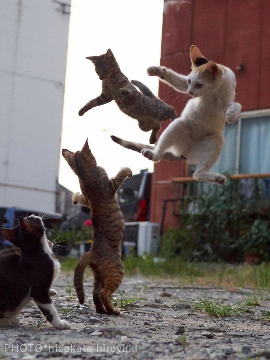 ninja-cats-photography-hisakata-hiroyuki-81-59f196f494ef6__880