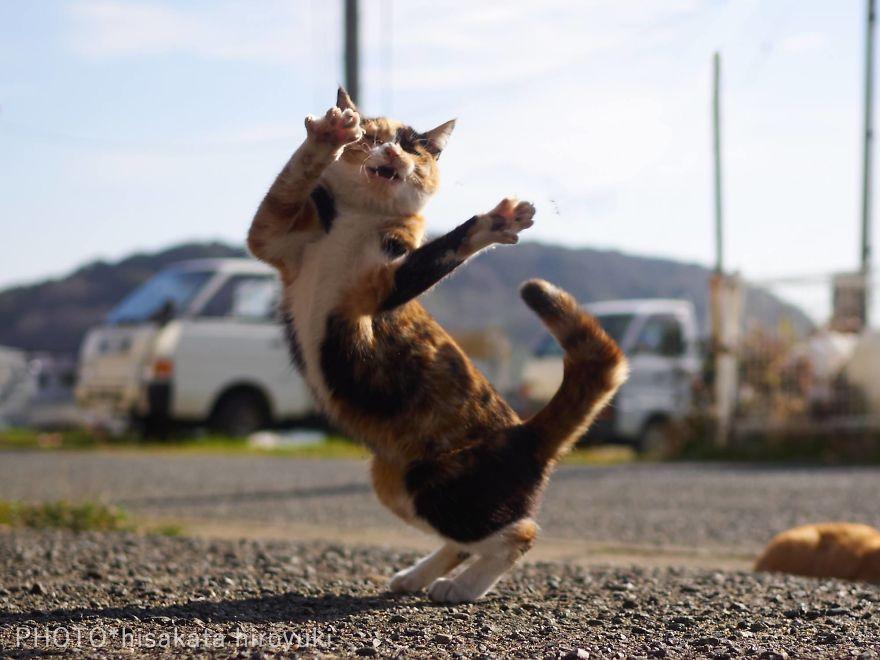 ninja-cats-photography-hisakata-hiroyuki-83-59f196fa6f857__880