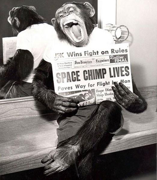 Šimpanz, ktorý bol vo vesmíre, pózuje po návrate na zem, 1961