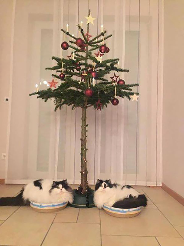 protecting-christmas-tree-from-dogs-cats-pets-19-585a7629ec52f__605