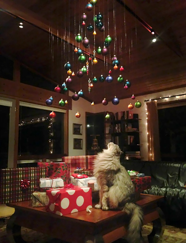 protecting-christmas-tree-from-dogs-cats-pets-8-585a69fda09e8__605