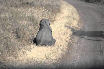video-slon