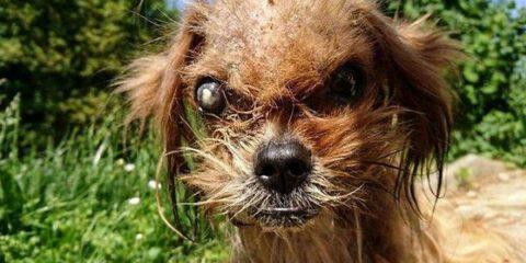stray-dog-frodo-transformation-marko-duspara-2-5a8d270c4a0d6__700