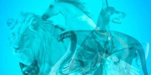 test-zvierata