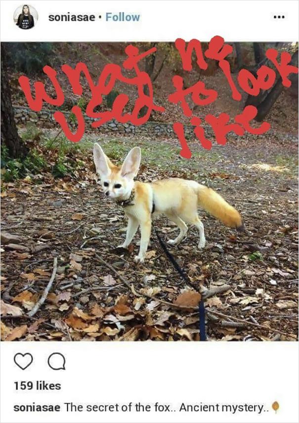 fennec-fox-vegan-diet-animal-abuse-jumanji-sonia-sae-16-5aa0fbe57c040__605
